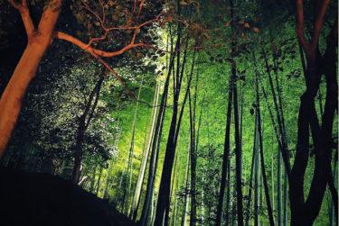 【京都・東山花灯路】ライトアップされた竹林が幻想的!美しき京都の魅力を感じに行こう。