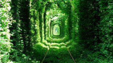 【ウクライナ】『愛のトンネル』首都キエフからリヴネへ | 都市探訪